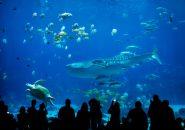 沖縄の神秘の海を二人で歩く、ロマンチックデートはいかが?