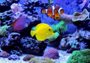 恋人同士でまったりと☆埼玉水族館はコストも安く楽しめます