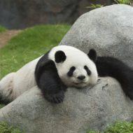 和歌山県のアドベンチャーワールドで動物と触れおう♪