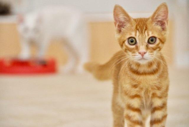 """【東京都】有楽町でネコ好きな人のための新しい出会い""""猫カフェコン"""""""