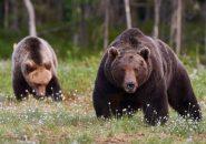 【婚活豆情報】あまり知られていないクマの恐ろしい婚活方法