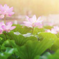 咲き乱れる花や草の中、鳥と戯れる熱々婚活デート【静岡県掛川市】