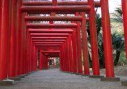 宮崎県で縁起の良いもの見つけた!一葉稲荷神社で婚活祈願!
