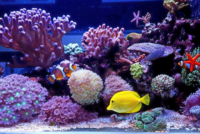 山口県の水族館【海響館】が可愛すぎるとカップル達に話題