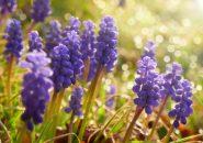 【婚活豆知識】贈ってはいけない…本当はこわーい意味を持つ花