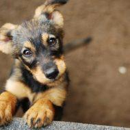 共通の価値観は「犬が好き」。これからはペットが飼い主を仲人する時代?