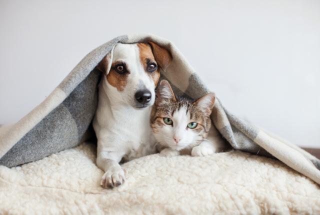 犬や猫も婚活する時代?「ペットのためのお見合いパーティー」