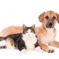 あなたは犬派?猫派?動物好きを集めた「ペット婚活」