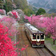 旅好きは集まれ!走る婚活列車で「鉄コン」