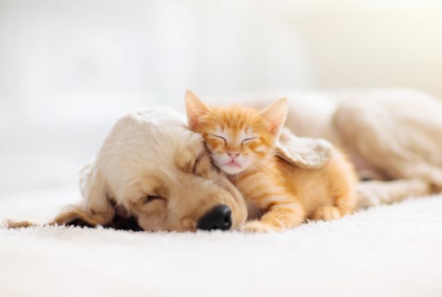 「ペットを飼ったら結婚できない?」ワンニャンは愛のキューピッド